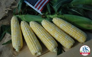 Sweet Corn American Dream