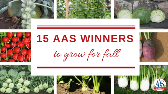 15 AAS Winners to grow for Fall - Easy to grow in your garden