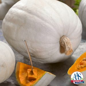 Pumpkin Super Moon - You and your goblins will love the nice, eye-appealing ghostly white coloration on these blemish-free round pumpkins.