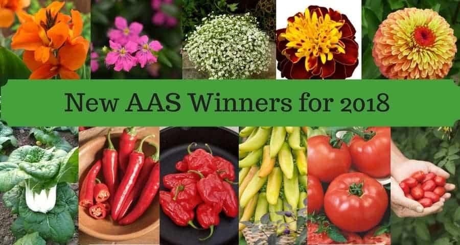 AAS Winner Header