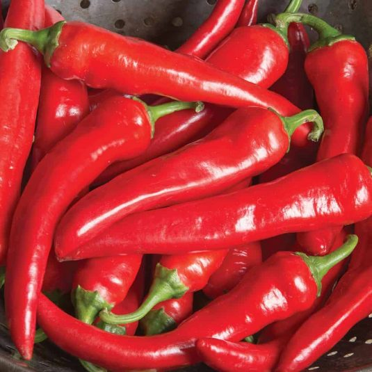 Pepper cayenne Red Ember - 2018 AAS Edible - Vegetable Winner