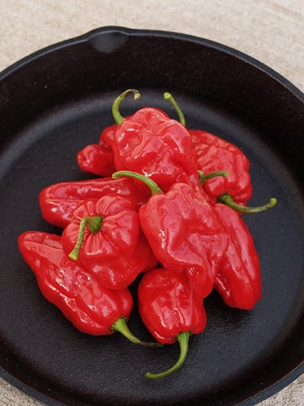 Pepper habanero Roulette - 2018 AAS Edible - Vegetable Winner