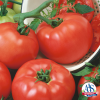 Tomato Chef Choice Red - 2018 AAS Edible-Vegetable Winner