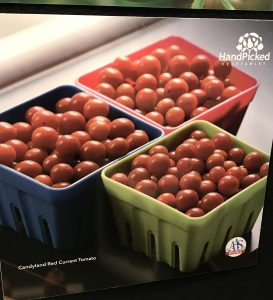 Candlyland Tomatoes at the Michigan Grower Expo