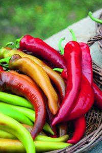 Pepper Mexican Sunset F1 - 2018 AAS Edible-Vegetable Regional Winner