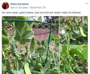 Comment on our Flower and Vegetable Winner Facebook Group