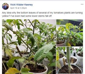 Flower and Vegetable Winner Facebook Group