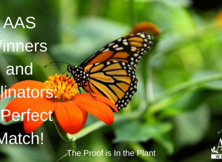 AAS Winners and Pollinators - A Perfect Match