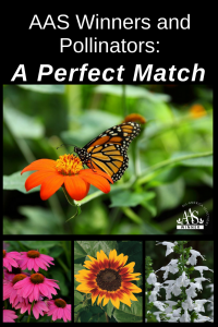AAS Winners and Pollinators: A Perfect Match