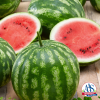 Watermelon Cal Sweet Bush - 2019 AAS Edible Winner