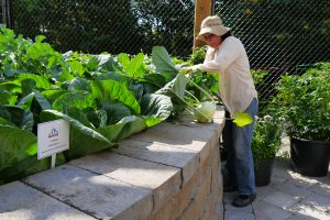 Humber Arboretum Food Learning Garden, Toronto Canada - AAS Display Garden