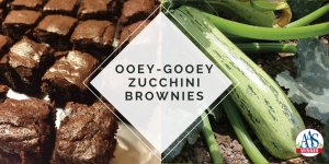 Ooey-Gooey Zucchini Brownies - AAS Winner Bossa Nova Zucchini - All-America Selections