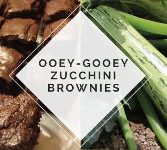 Ooey-Gooey Zucchini Brownies - AAS Winner Bossa Nova Zucchini - All-America Selections