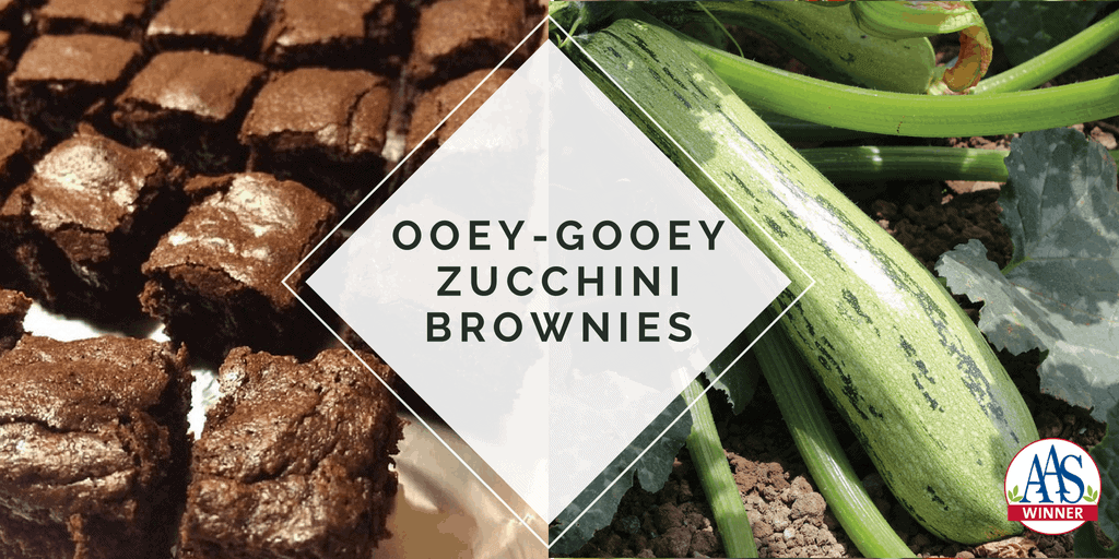 Easy To Make Zucchini Brownies All America Selections