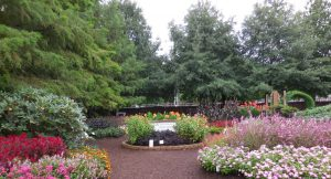 First Place Winner: Purdue Extension Marion County Demonstration Garden, Indianapolis, Indiana - AAS Display Garden 2018 Challenge