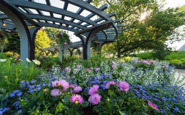 First Place Winner: The Annuals Garden & Pavilion (Denver Botanic Gardens), Denver, Colorado. - AAS Display Garden Challenge 2018