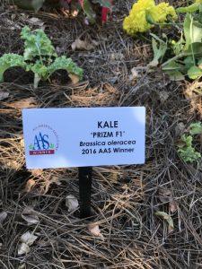 Kale Prizm - 2016 AAS Winner