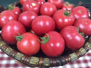 Tomato Mountain Rouge - 2019 AAS Edible/Vegetable Winner