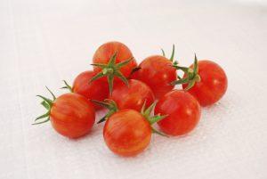 Tomato Sparky XSL - 2019 AAS Edible/Vegetable Winner