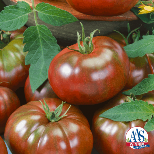 Tomato Chef's Choice Black - 2019 AAS Edible-Vegetable Winner