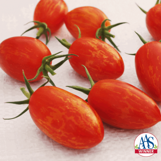 "Tomato Red Torch - 2019 AAS Edible/Vegetable Winner - a striped oblong tomato with 1.5"" long fruits that weigh about 1.5 ounces."