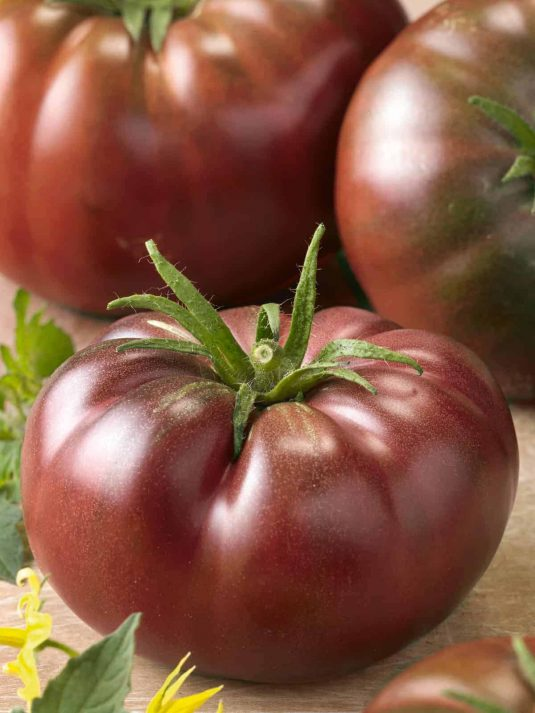 Tomato Chef's Choice Black - 2019 AAS Edible/Vegetable Winner