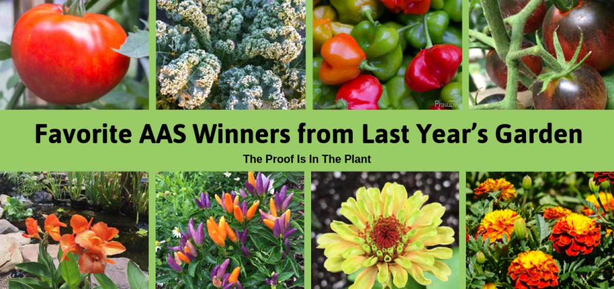 Favorite AAS WInners from Last Year's Garden