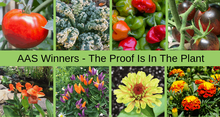 AAS Winner - The Proof is in the Plant