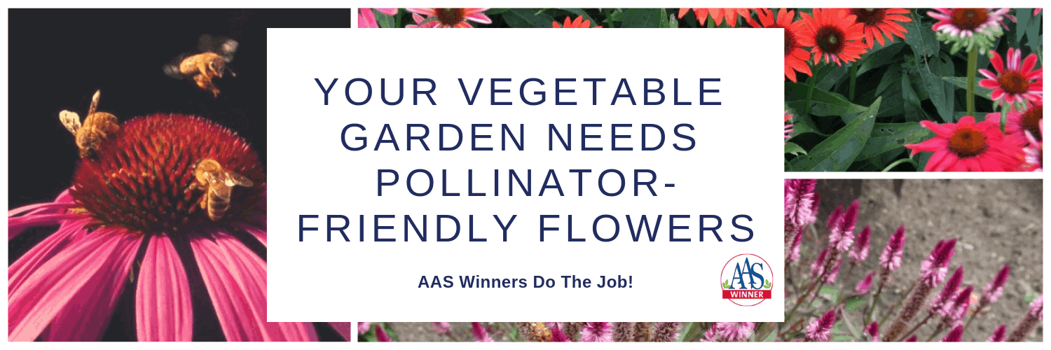 Your Vegetable Garden Needs Pollinator-Friendly Flowers
