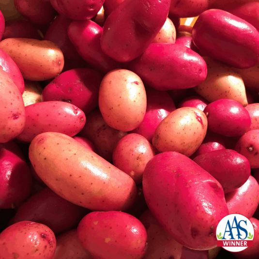 Potato Clancy - 2019 AAS Edible-Vegetable Winner - The first potato grown from seed!