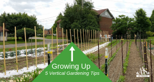 Growing Up - 5 Vertical Gardening Tips from All-America Selections