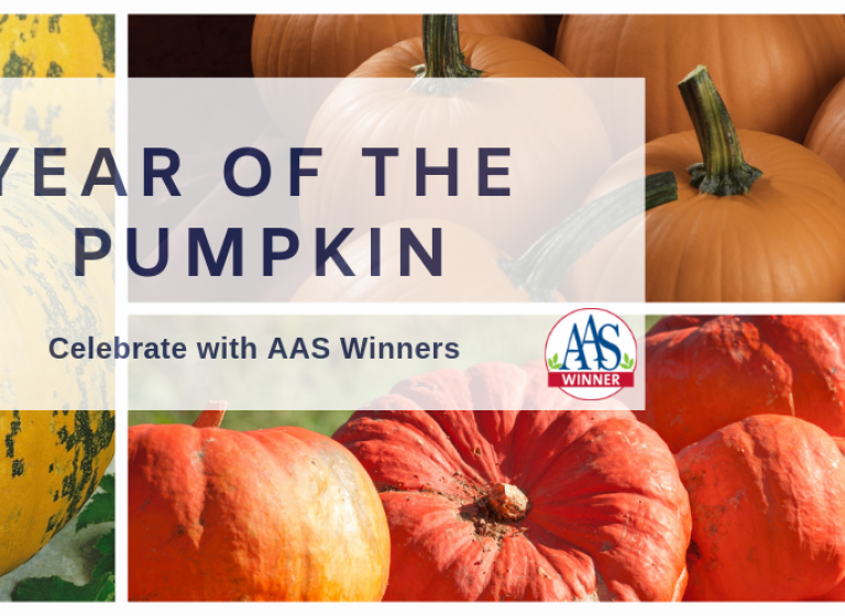 Celebrate the Year of the Pumpkin with AAS Winners