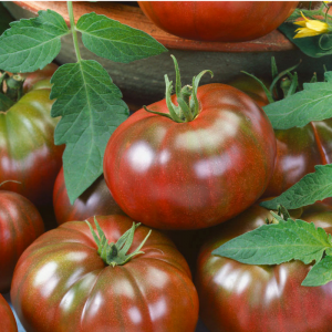 Tomato Chef's Choice Black - AAS Winner