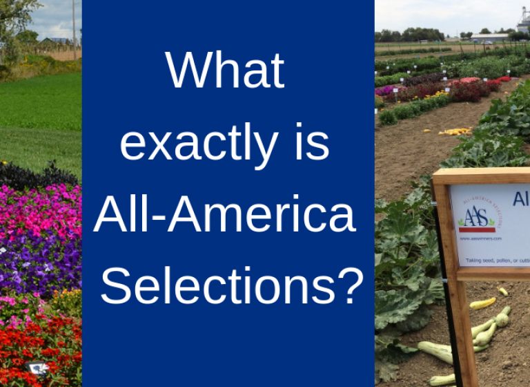 What is All-America Selections? Find out here