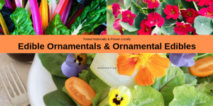 Edible Ornamentals & Ornamentals Edibles - Grow them both in your garden with AAS Winners