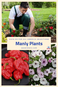Manly Plants Guys Go for All-America Selections