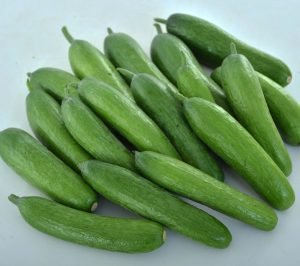 Cucumber Green Light - AAS Edible-Vegetable Winner