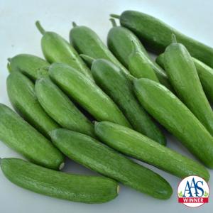 Cucumber Green Light - 2020 Edible-Vegetable AAS Winner