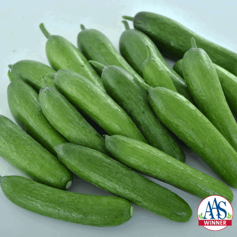 Cucumber Green Light - 2020 Edible-Vegetable AAS Winner