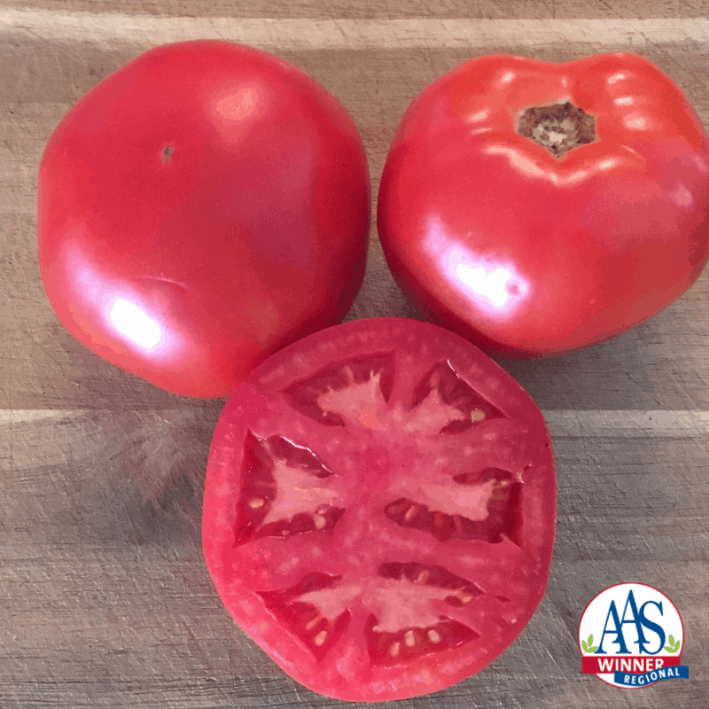Tomato Galahad - 2020 AAS Edible-Vegetable Winner