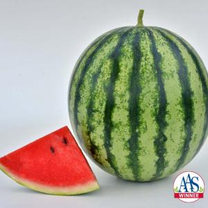 Watermelon Mambo - 2020 AAS Edible-Vegetable Winner