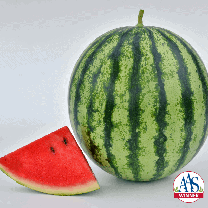 Watermelon Mambo - 2020 AAS Edible-Vegetable Winner
