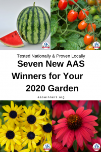 AAS Winners for your garden