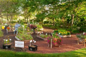 Second Place Winner: Kenosha County Center AAS Display & Demonstration Garden, Kenosha, Wisconsin - All-America Selections 2019 Display Garden Challenge