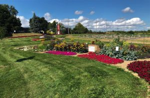 """Honorable Mention: """"Excellent Plant Quality and Design"""": William Dam Seeds, Dundas, Ontario, Canada - 2019 All-America Selections Design Challenge"""