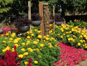 First Place Winner: Purdue Extension Marion County Demonstration Garden, Indianapolis, Indiana - All-America Selections 2019 Display Garden Challenge