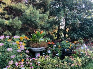 TIE! Third Place Winner: McCrory Gardens, Brookings, South Dakota - All-America Selections 2019 Display Garden Challenge