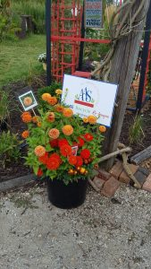 First Place Winner: Master Gardener Association of Tippecanoe County (MGATC) Display Gardens, Lafayette, Indiana - All-America Selections 2019 Display Garden Challenge