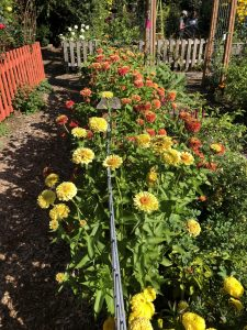 """Honorable Mention: """"Best Use of Vibrant Colors"""": Jennings Park, Marysville, Washington - All-America Selections 2019 Display Garden Challenge"""