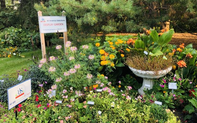 TIE! Third Place Winner: McCrory Gardens, Brookings, South Dakota - All-America Selections 2019 Display Garden Challenge
